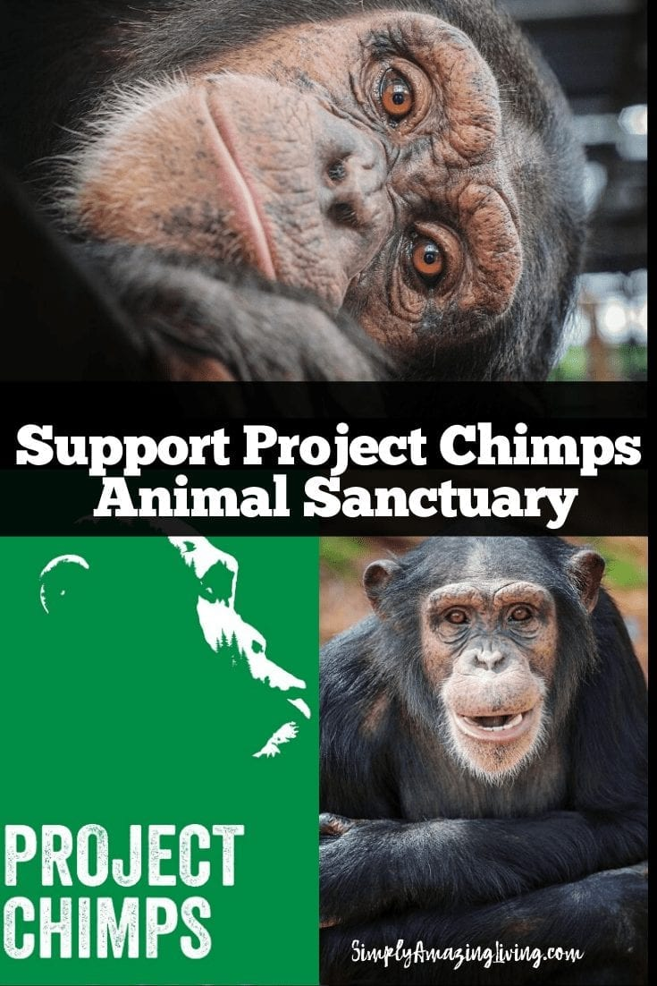 Project Chimps Pin 2
