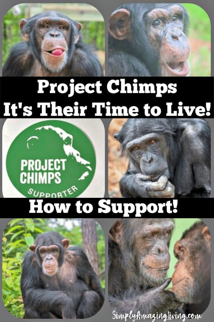 Project Chimps Piin