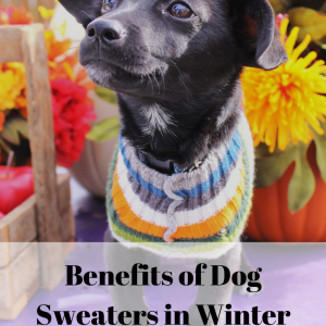 Benefits of Dog Sweaters