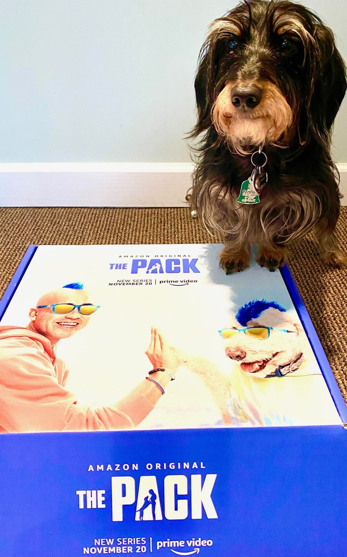 The Pack on Amazon Prime Video box with Rebel image